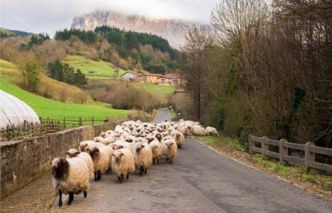 De ruta por las cañadas reales de España