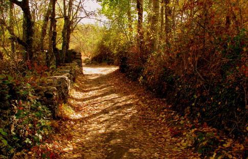Planes para dar la bienvenida al otoño