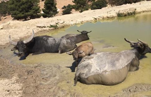Safaris en España, descubre el lado más salvaje