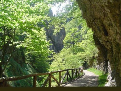 El bosque encantado casa rural en san andres de agues asturias clubrural - Casa rural el bosque navaconcejo ...