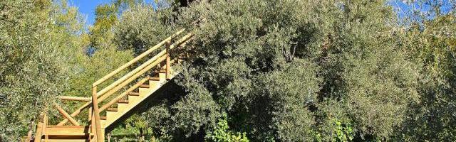 Cabañas en los árboles… ¡anímate!