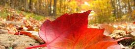 Rascafría te invita a conocer el otoño de la Sierra madrileña