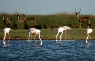 Tres formas de conocer el Parque Natural de Doñana