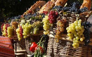 Tradición vinícola en España: fiestas de la vendimia