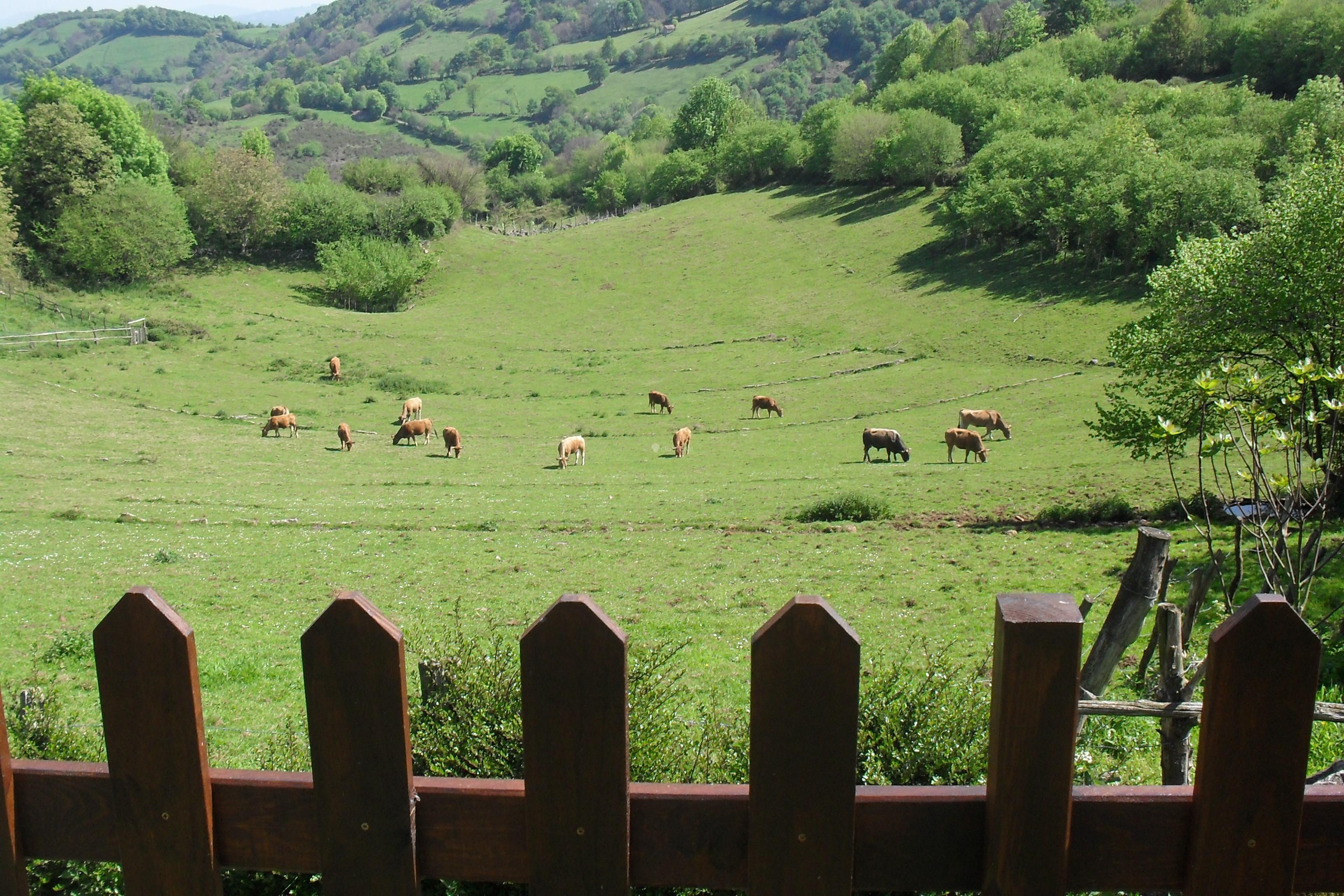 Fotos de casa rural la vallonga asturias grado clubrural - Fotorural asturias ...