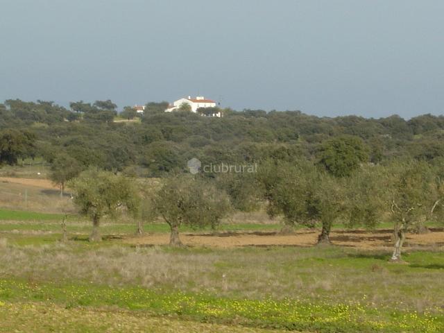 Fotos de cortijo la gabrielina badajoz merida clubrural - Alojamiento rural merida ...