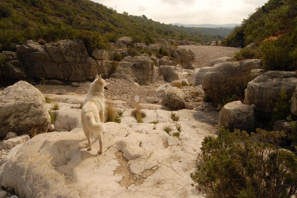 Fotos de la toscana castell n les coves de vinroma - La toscana casa rural ...